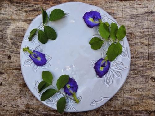 Resultado de imagem para Chá de flores azuis de feijão-borboleta