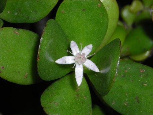 Resultado de imagem para flores unicas en el mundo