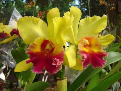 Resultado de imagem para flores mais belas do mundo