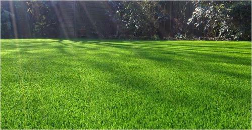 Resultado de imagem para gramado de grama