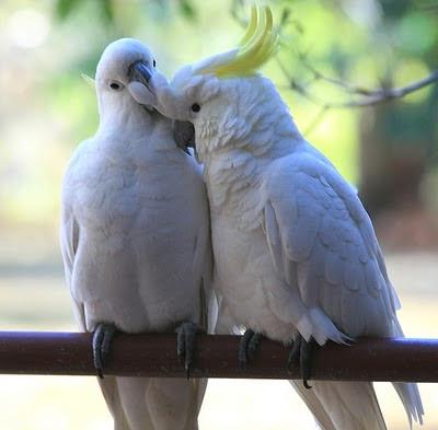 Resultado de imagem para dois passarinhos