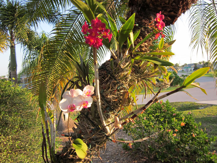 Paixão por orquídeas - Meu orquidário: Cuidados com as orquídeas plantadas  em árvores