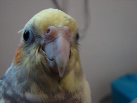 Resultado de imagem para olhos e bicos de aves