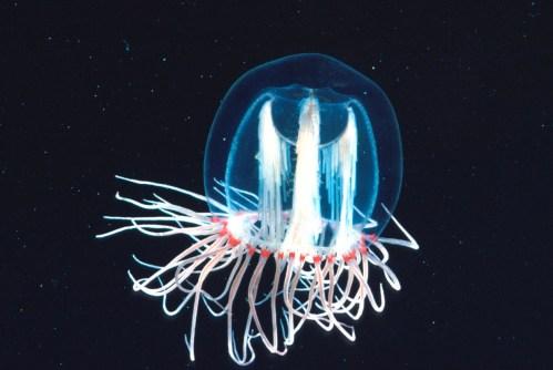 Resultado de imagem para plânctons