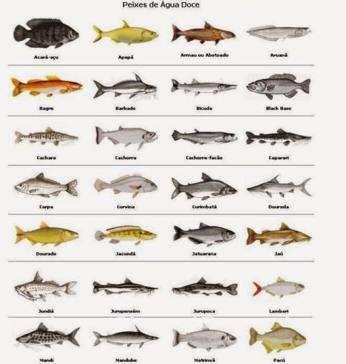 Resultado de imagem para peixes de água doce