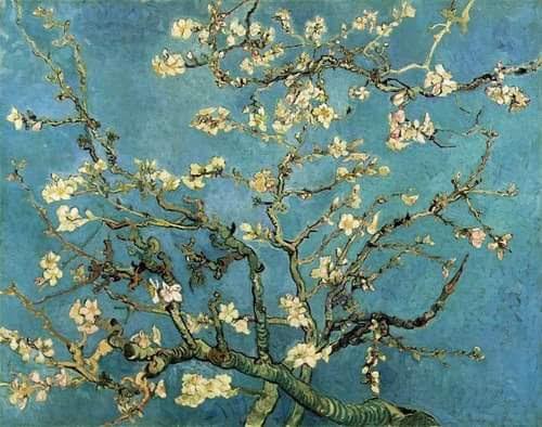 Resultado de imagem para Amendoeiras van Gogh