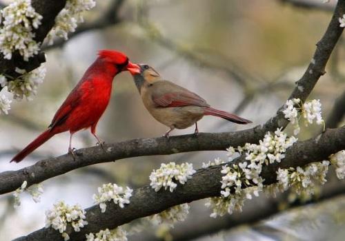 Resultado de imagem para pássaros se beijando