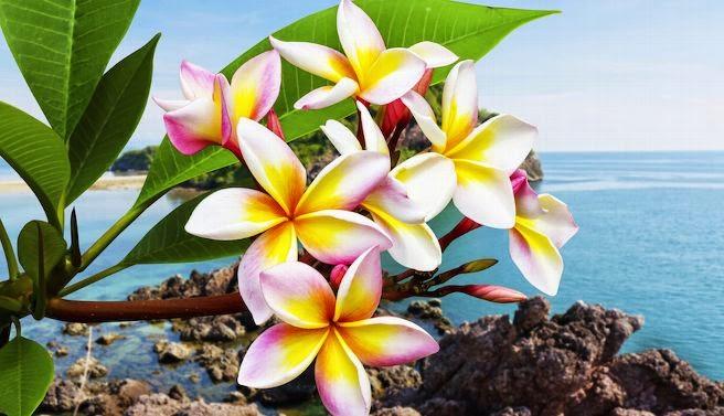 Resultado de imagem para as mais lindas flores do mundo