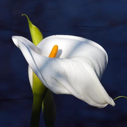 Resultado de imagem para Flores maravilhosas
