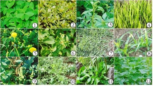 Plantas indicadoras, espontâneas ou ervas daninhas