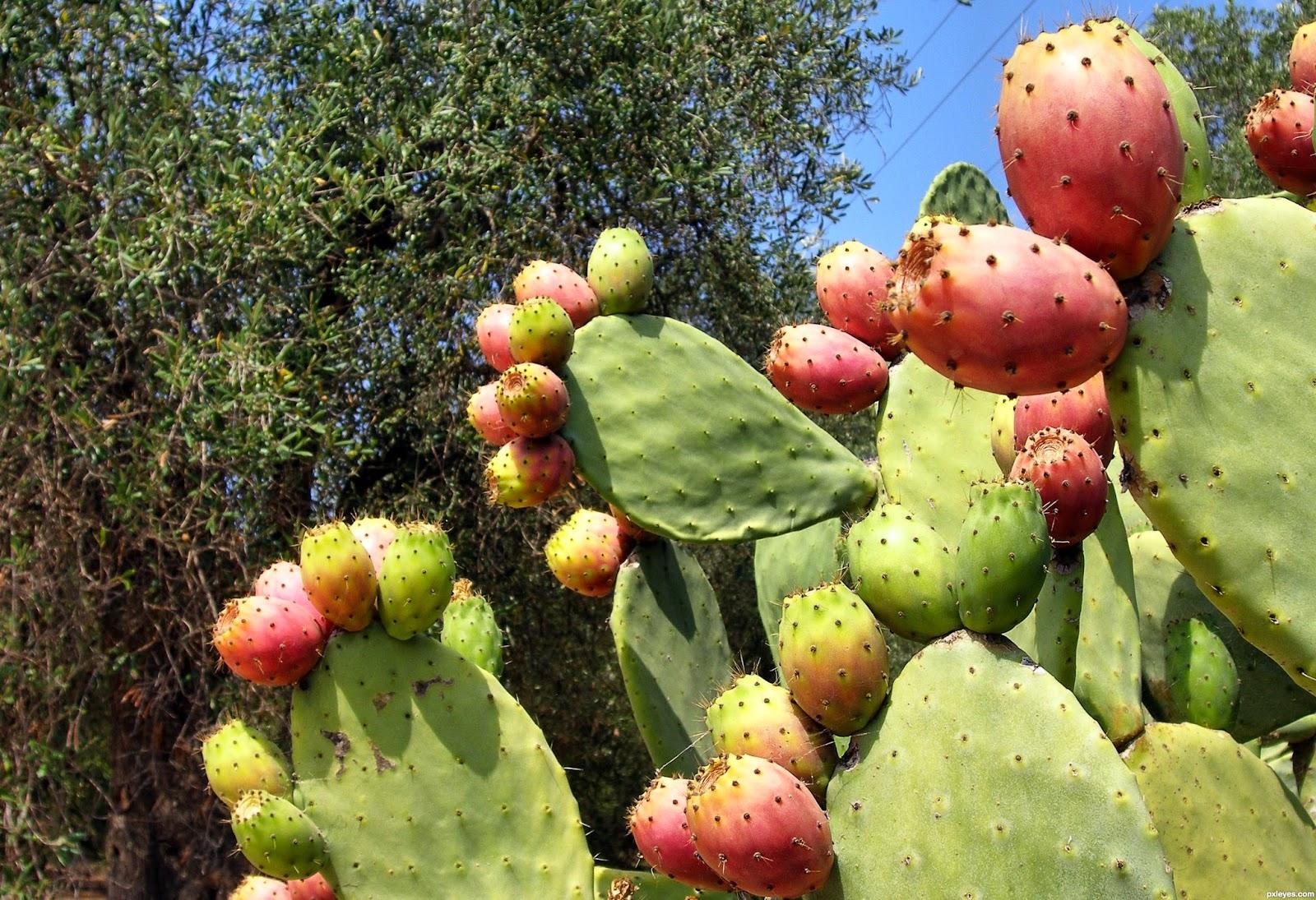 Resultado de imagem para fruta de palma